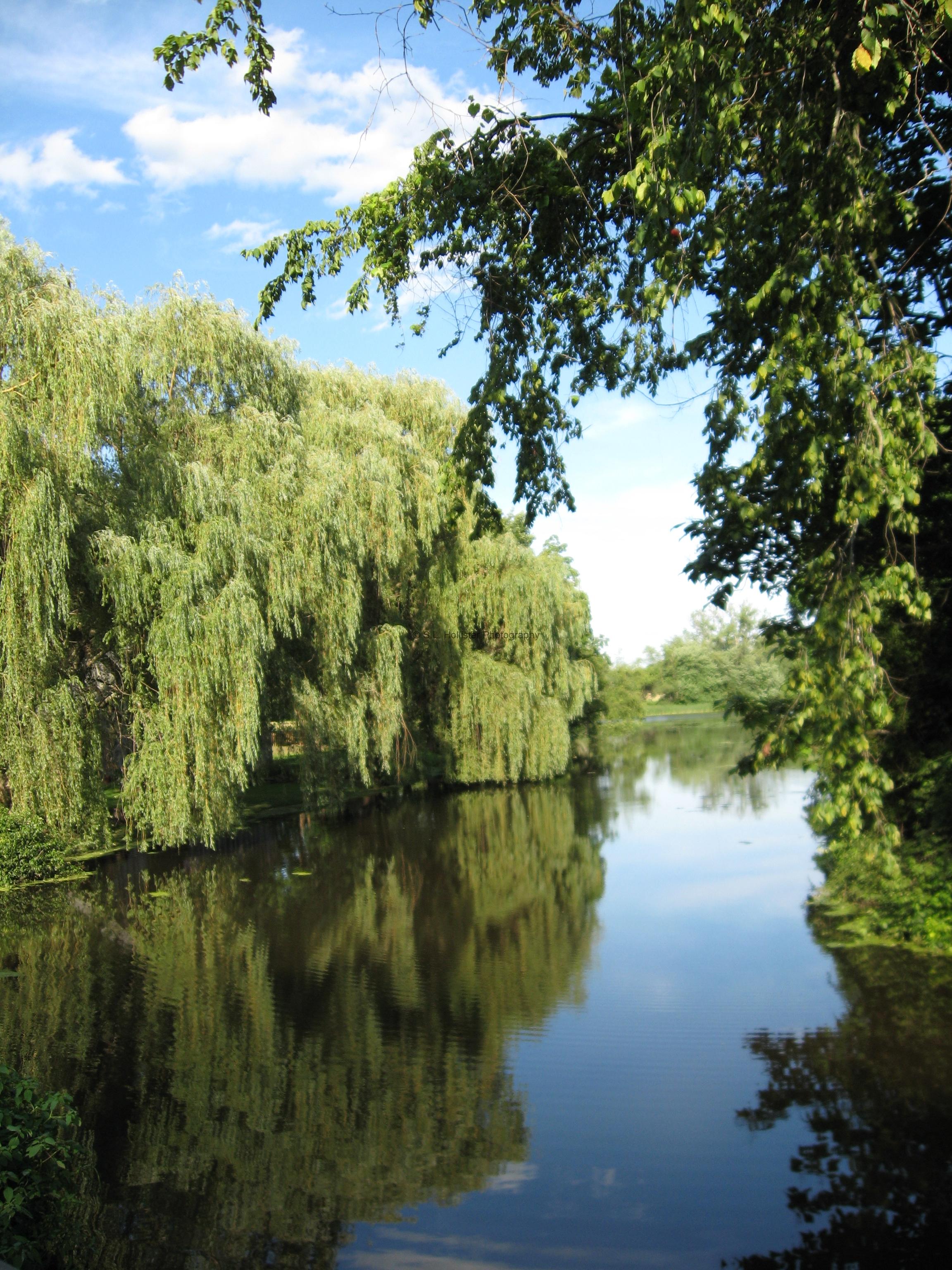Windsorville Pond in July