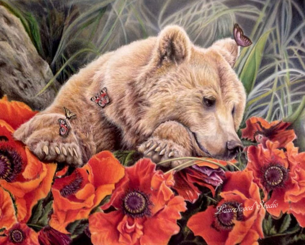 Bear and Poppies, colored pencil