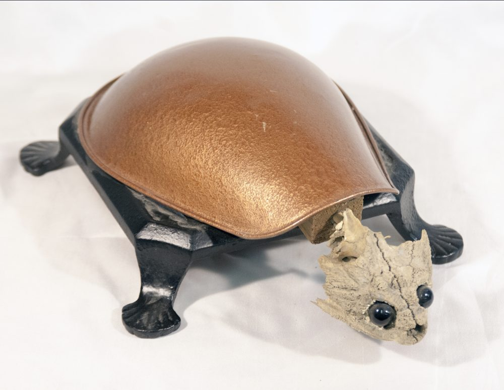 copper back turtle