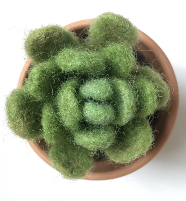 Needle Felted Succulents Workshop