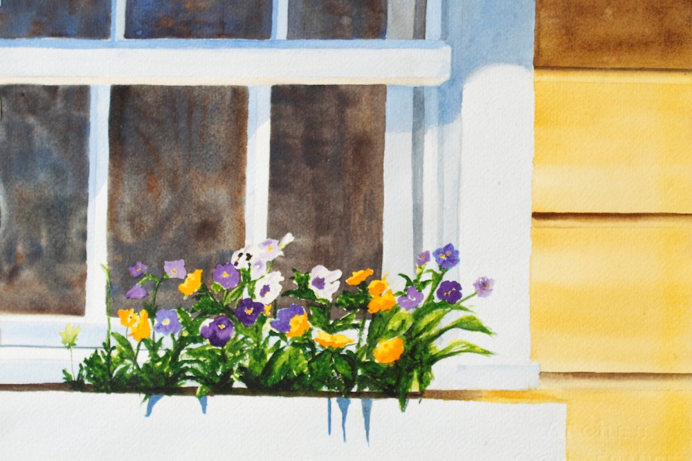 June Pansies, watercolor