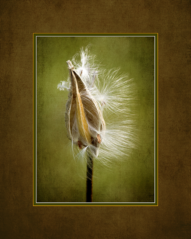 Blowing in the Wind, digital photography