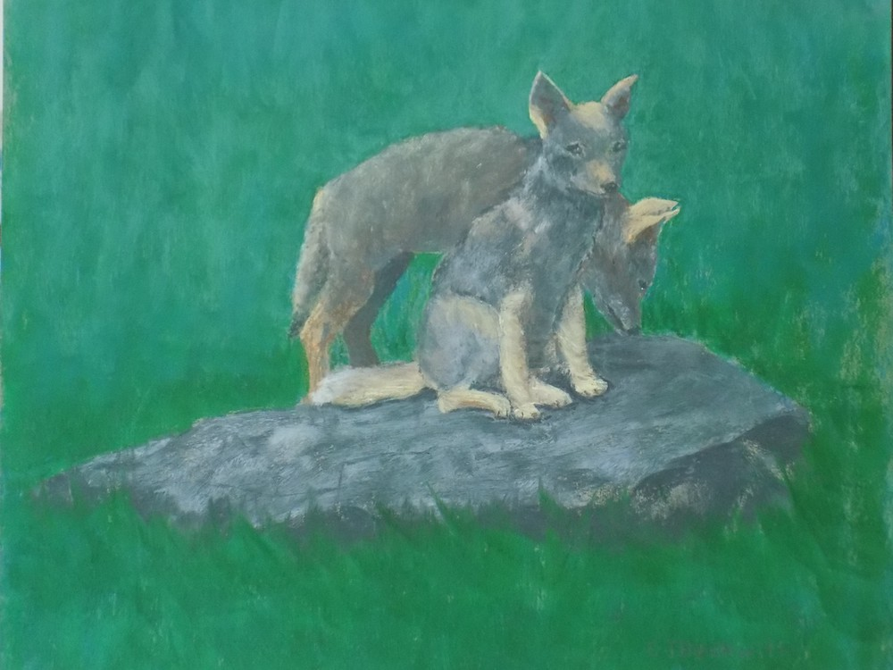 Cape Coyote Pups, pastel