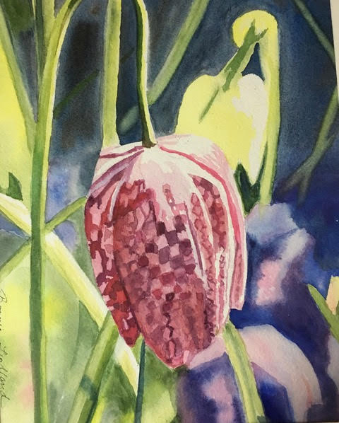 Fritilla Meleagris, watercolor
