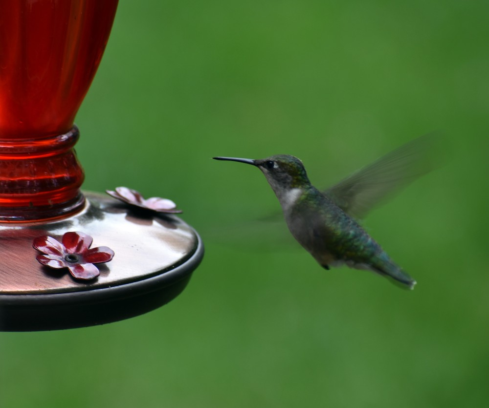 Hummingbird, digital photography