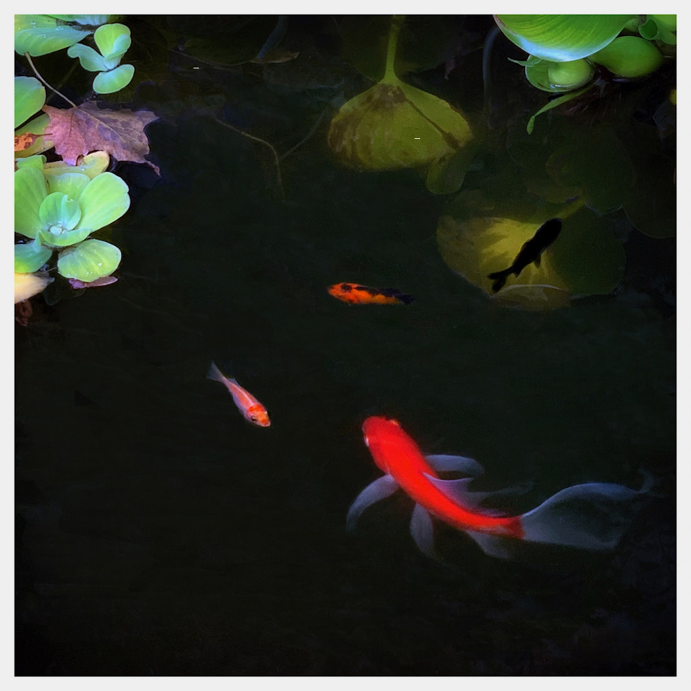 Four Fish, photography