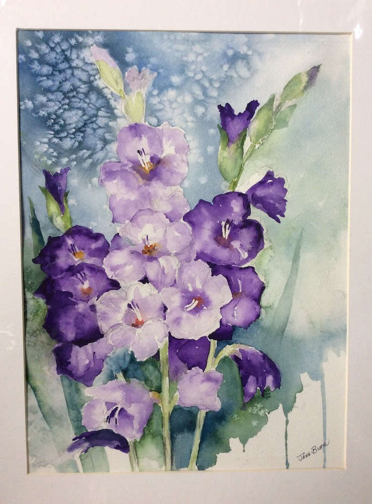 Gladiolus, watercolor